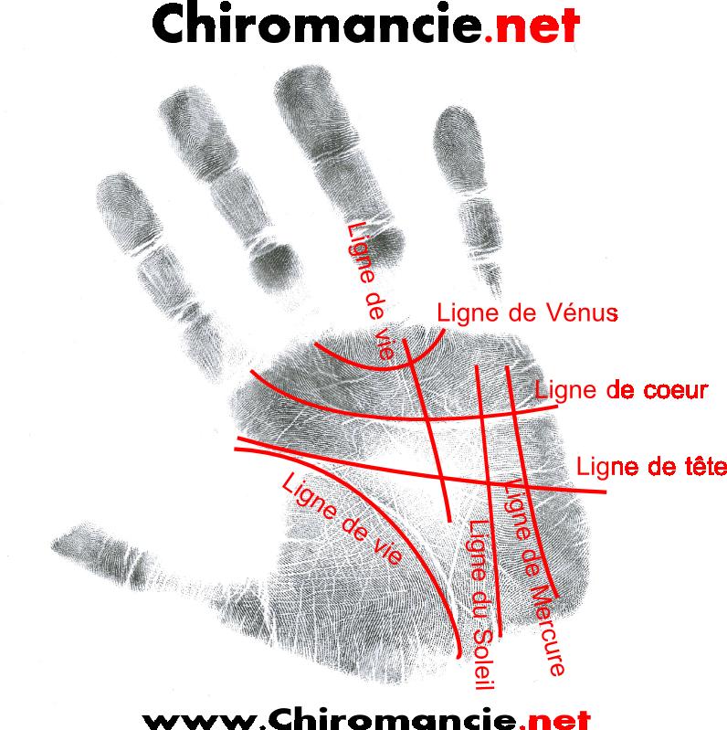 La main gauche, considérez leur main gauche. identifiez les quatre
